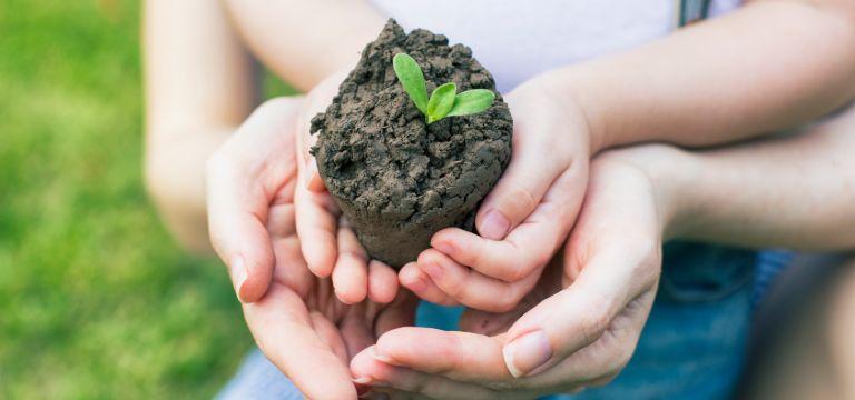 Manos sosteniendo planta de un huerto